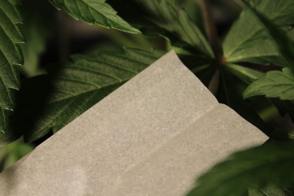 Canadian Lumber premium and all natural rolling paper action shot, The Woods in the Green